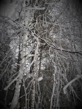 Podlasie zima las